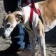 DOG HELP sospensore per cani disabili o anziani