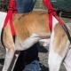 Coppia  di Dog Help sospensore per cani disabili o anziani, 2 pz.